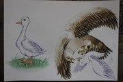 Красивые иллюстрации для Вас!